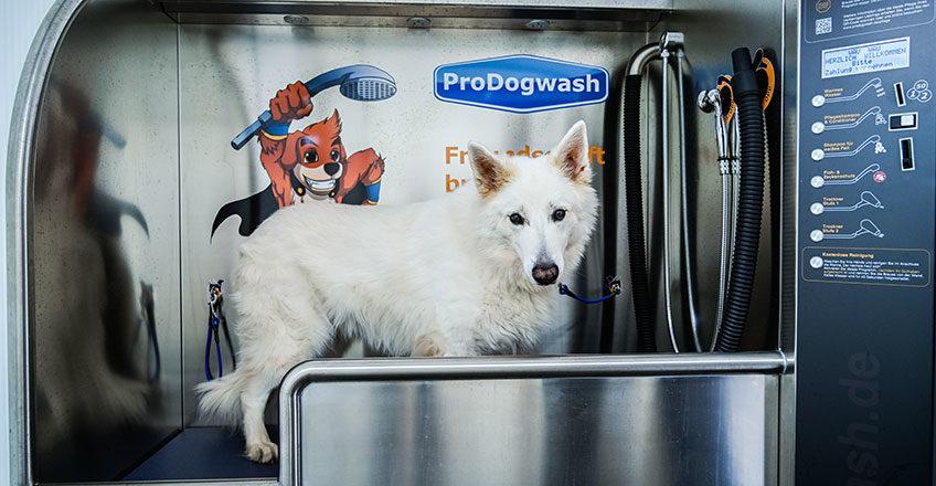 Saubere Sache: Wir eröffnen erste Waschanlage für Hunde in Pulheim-Brauweiler